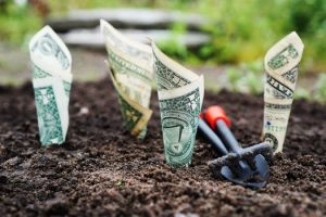 dollar-bills-growing-from-ground